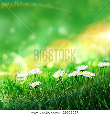 Daisies in the grass, spring background