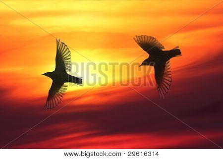 Fågelvänner