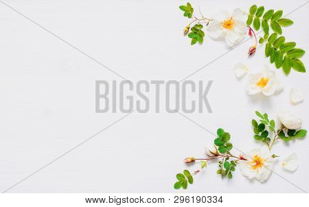 Flower summer background with summer rose hip flowers on white background. Flat lay, top view, space for text. Summer flower composition, summer flower design