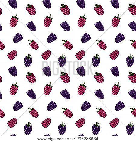 Black Berry, Bramble, Dewberry And Raspberry Hand Drawn Pattern Vector Illustration. Bramble Berries