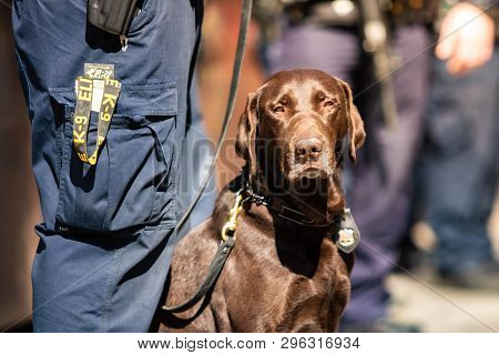 K9 Police Dog Together With Officer On Duty