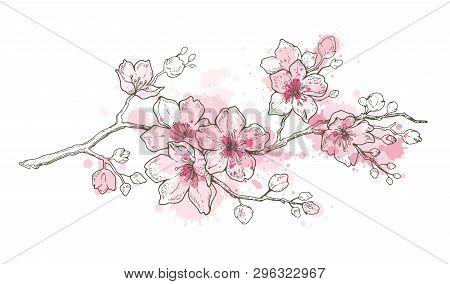 Spring Sakura Flowers Blossom Art, Hand Drawn Watercolor Style. Cute Paint Cherry Plant. Vector Illu