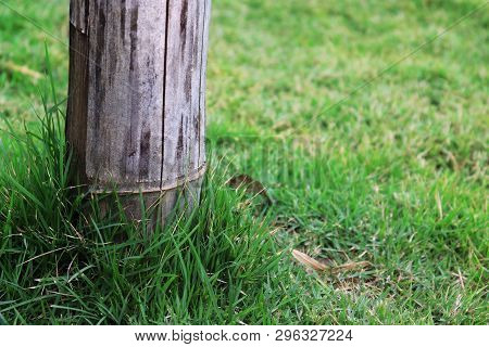 Bamboo Pole On Green Grass, Pole On Green Garden. High Resolution Image Gallery.
