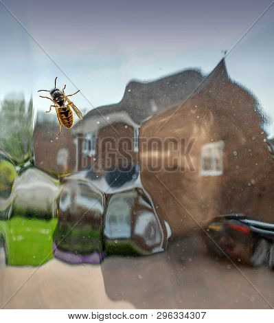 In English Spring,wasp Season Starts About Now In The Uk,and They Appear Seemingly From Nowhere. I O
