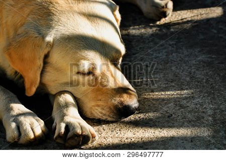 Dog Sick, Sleep Dog Relax Alone, Brown Dog Is Sleeping, Brown Dog Is Sleep Sick