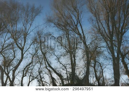 Winter; Naked Trees Reflected In Lake Water