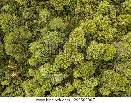 Aerial Top Down View Of Mixed Forest In Summer Season In Cevennes National Park Southern France