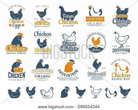 Chicken Badges. Fresh Farm Food Logotype Cooking Egg And Bird Broilers Vector Labels. Chicken Egg An