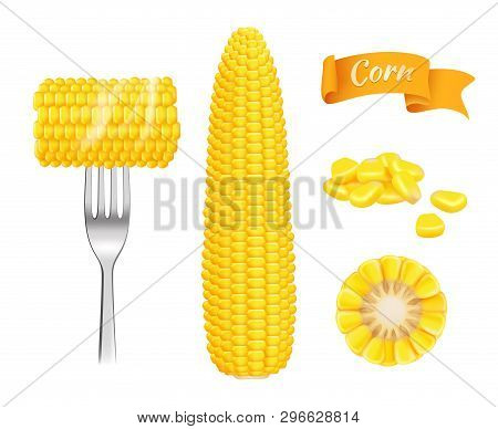 Corn Realistic. Harvest Fresh Cut Grains Eating Corn Vector Template. Illustration Of Realistic Corn