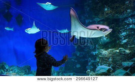 Moscow - April 2, 2018: Little Child Watches A Fish In Aquarium. Baby Looks And Points To The Stingr