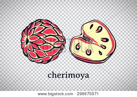 Hand Drawn Stylized Cherimoya. Vector Fruit Isolated On Transparent Background. Graphic Illustration