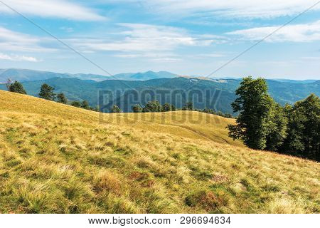 Wonderful Mountain Landscape In Late Summer. Alpine Meadow With Weathered Grass. Beech Forest At The
