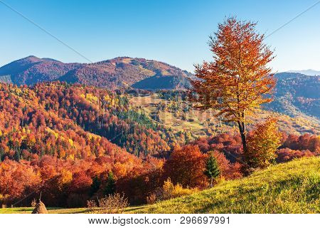 Mountainous Countryside In Autumn. Rural Fields On Grassy Hills. Trees In Fall Foliage. Wonderful Su
