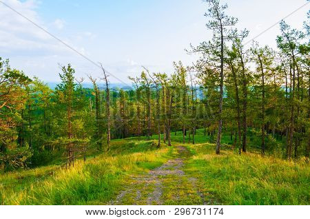 Forest landscape with trees, mountain slopes and lake under soft sunset light - sunset summer view of forest mountain nature Dense forest scene, green forest trees in cloudy weather. Forest spring nature