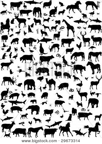 Collection Of Mix Animals Silhouette