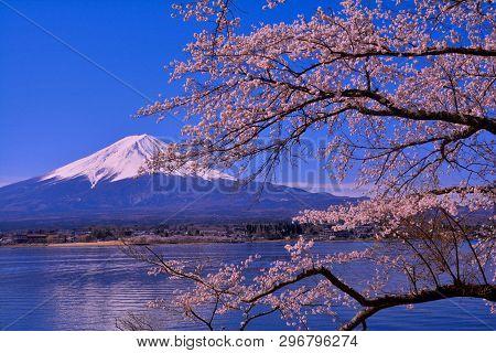 Cherry Tree And Mt.fuji From Nagasaki Park In Lake Kawaguchi Japan 04/06/2019
