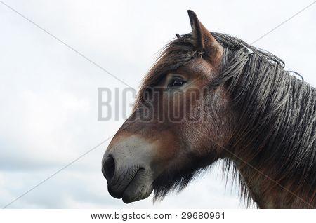 Brabant draft horse