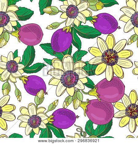 Passionflower Passiflora, Passion Purple Fruit Floral Seamless