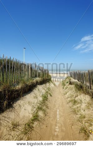 A Beautiful Path Through The Dunes