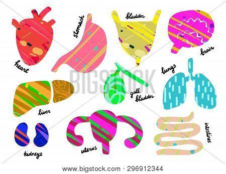 Set Of Human Organs. Anantomy. Heart, Liver, Lungs, Gall Bladder, Uterus, Intestines, Stomach, Kidne