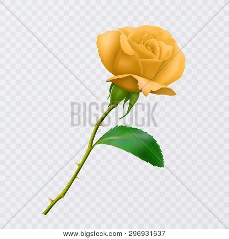 Beautiful Yellow Rose On Long Stem With Leaf And Thorns Isolated On White Background, Decoration For