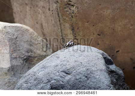 Scene Of A Sea Crab On A Stone. This Photo Is Taken On Madeira, Portugal