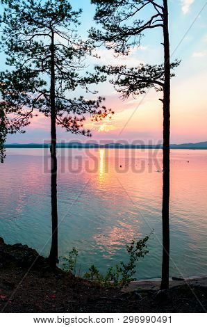 Summer landscape - pine trees at the edge of the cliff and lake lit by sunset light. Colorful summer water landscape scene