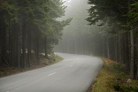 Winding Road In Fog - Surrounded By Pine Trees