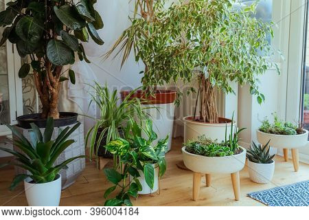 The Little Home Garden Inside The House Room. Composition Of Different Stylish Pots With Various Pla