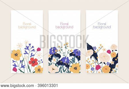 Set Of Vertical Floral Card Or Banners With Place For Text. Collection Of Flyers With Gorgeous And E