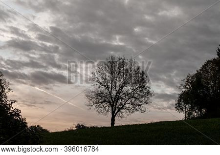 An Autumnal Landscape In Dawn With An Oak Tree On A Meadow
