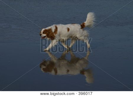 Dogs Reflection