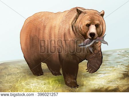 Grizzly bear with fish in his mouth illustration
