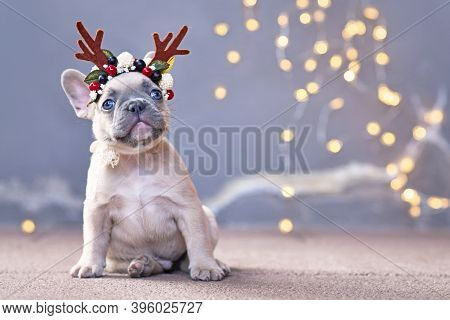 Cute French Bulldog Dog Puppy Wearing A Seasonal Christmas Reindeer Antler Headband With Autumn Berr