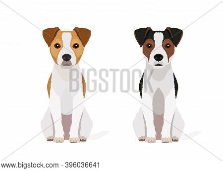 Vector Portraits Of Two Jack Russell Terriers In Different Colors Isolated On White Background