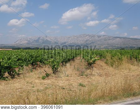 Wine Landscape And Viticulture In Provence, France