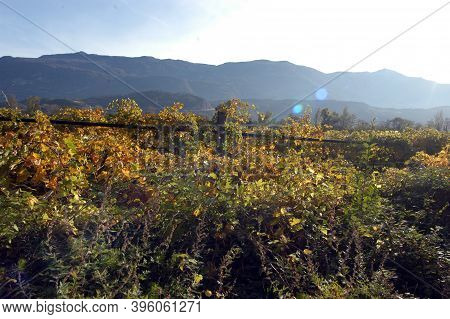 Winegrowing And Viticulture In South Tyrol