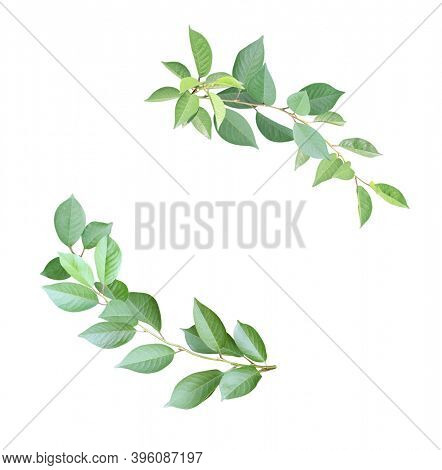 Decorative round frame with branch with green leaves. Corner element made of cherry twigs with green leaves. Isolated on white background