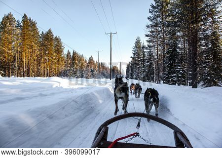 Sled dogs are husky. A dog sled carries a sled with tourists. The toboggan run is rolled in deep snow. The sun is low on the horizon. Travel to Santa Claus. Short winter day in the Lapland