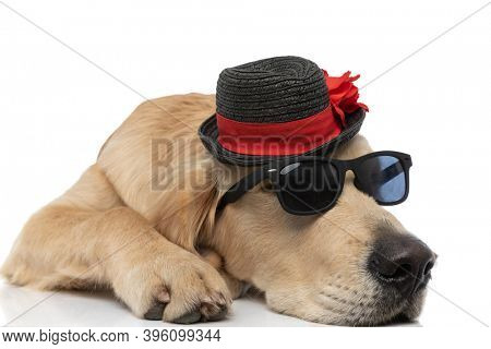cool golden retriever dog lying down rocking a pair of sunglasses and a hat against white background