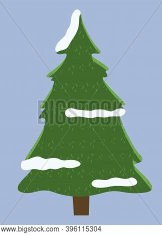 Winter Nature Prickly Spruce, Plant Fir-tree With Snow On The Branches Isolated On Gray Background.