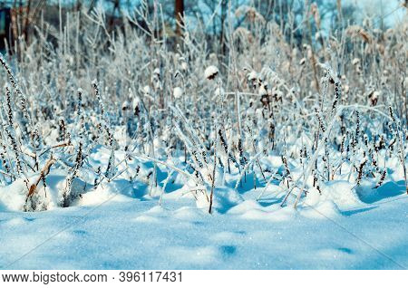 Winter nature landscape, fields nature plants covered with frost and snow, winter snowy field nature, winter nature background, winter nature scene