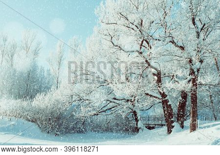 Winter Christmas landscape, frosty winter trees in the forest at the sunrise. Winter tranquil Christmas landscape of forest Christmas nature covered with fresh frost and snow