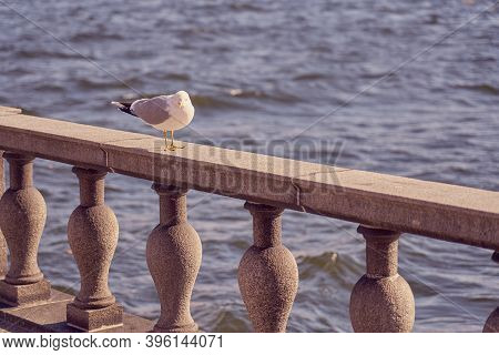 Seagull Portrait In City. Close Up View Of White Bird Seagull Sitting On A Sea Shore Against A Blue