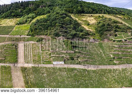 Zell, Germany - July 27, 2020: Scenic Vineyards At The Moselle Valley Near Zell With The Famous Stee