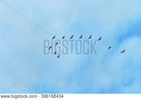 Group Of Birds Are Flying Away. Migration Of Birds. Black Silhouettes Of Flying Birds, Cloudy Sky On