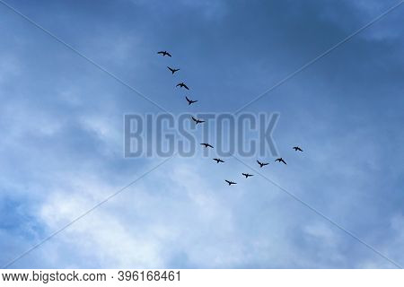 Migration Of Birds. Group Of Birds Are Flying Away. Black Silhouettes Of Flying Birds, Cloudy Sky On