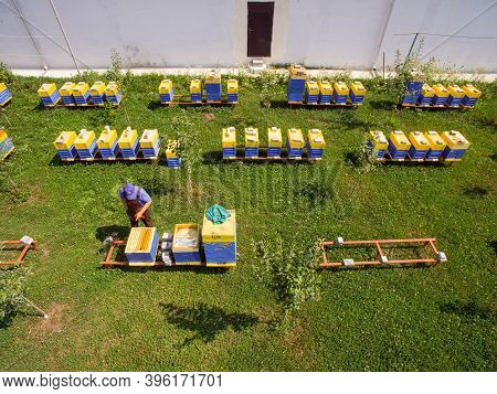 The Beekeeper Inspects The Hives. Industrial Beekeeping
