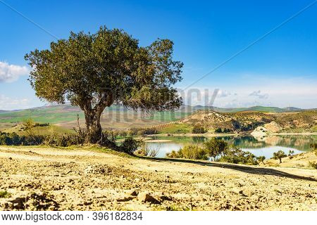 Spanish Nature Landscape. Embalse Del Guadalhorce And Surrounding Countryside With Olive Tree. Ardal