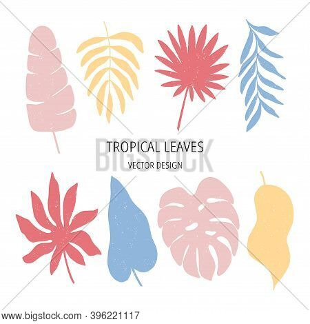 Tropical Leaf Flat Vector Illustration Set. Jungle Print Isolated On White Background. Modern Poster